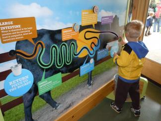 Interactive exhibits can enhance learning, but are an expensive element to include in a preschool.