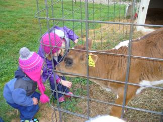 Wild Roots students greet a new calf at the farm.